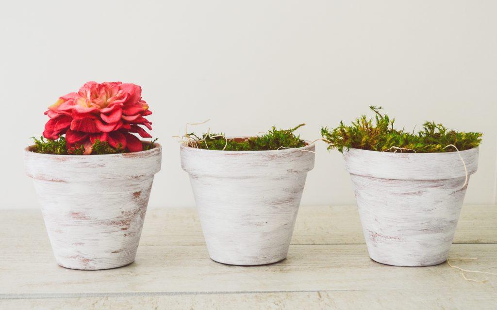 whitewashed plant pots