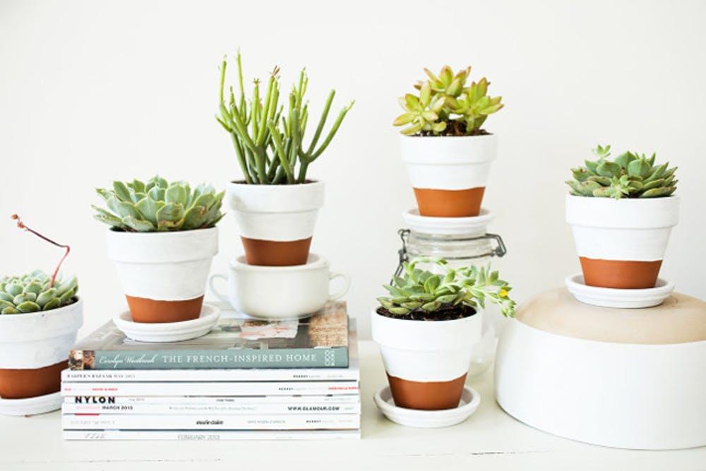 Paint plant pots white!