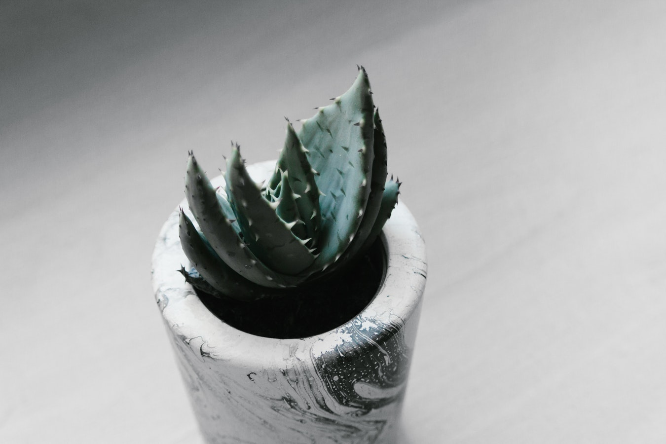 marbled plant pot for small cactus