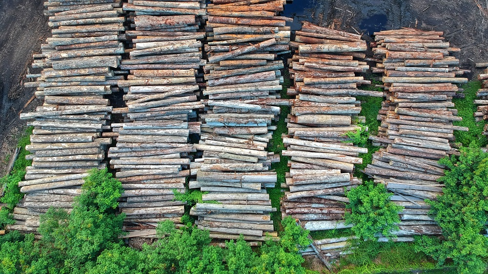 Logs birds eye view deforestation